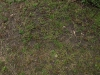 Ground-Nature_Texture_A_P4120796