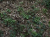 Ground-Nature_Texture_A_P5072562