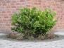 Plants-Bushes