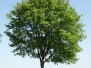 Plants-Trees-Green