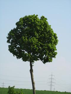 Basic photo for a cutout tree