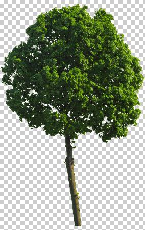 The final cutout green tree
