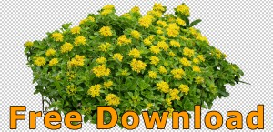 Flower_Cutouts_Free_Download_02