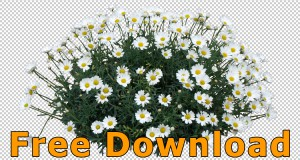 Flower_Cutouts_Free_Download_04