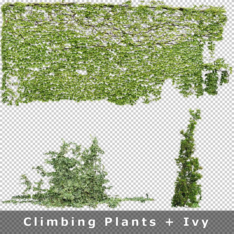 cutout plants v01 graphics for on climbing ivy plants - Climbing Plants
