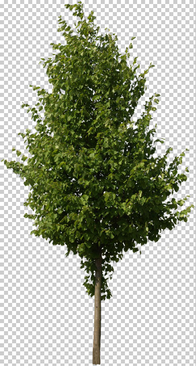 Free cutout tree with alpha channel