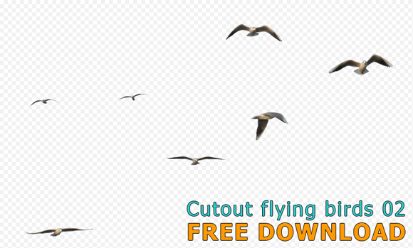 Cutout-flying-birds-02_580