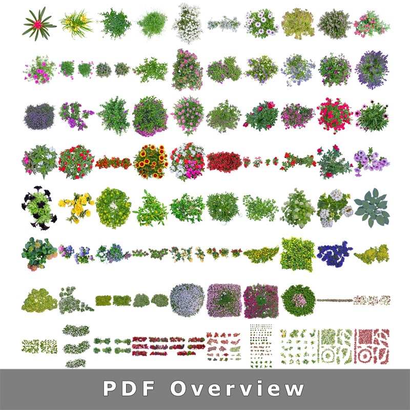 Top view flowers cutout plan view images png for for Flower bed design plans