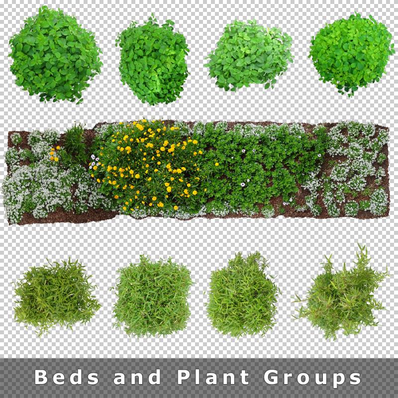 Top View Plants 02 2D Plant Entourage for Architecture
