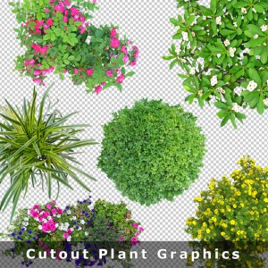 top-view-cutout-plant-free-download