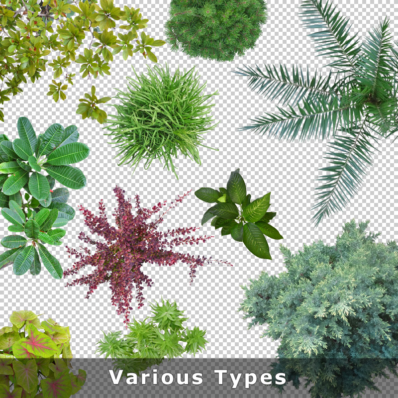 Top view plants 01 cutout plan view plant graphics png for Garden design graphics