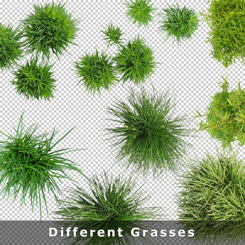 Top View Plants 02 – 2D Plant Entourage for Architecture