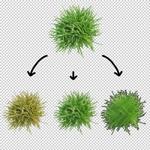 150-Photoshop-psd-plant-grass-bush-download