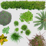 150-cutout-top-view-plant-collection-architects