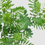 150-high-resolution-plant-no-background