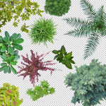 150-library-of-cutout-top-view-plants
