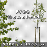 150_BoulevardTreesVol01_free.jpg