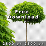 150_Cutout Trees Vol1_free.jpg