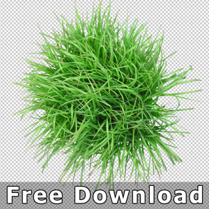 free-download-top-plan-view-grass-plant-png-psd