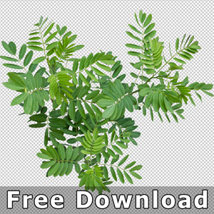 300-free-download-top-view-plant-png-landscape-design
