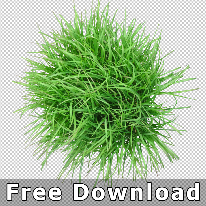 Free Download Top Plan View Grass Plant Png