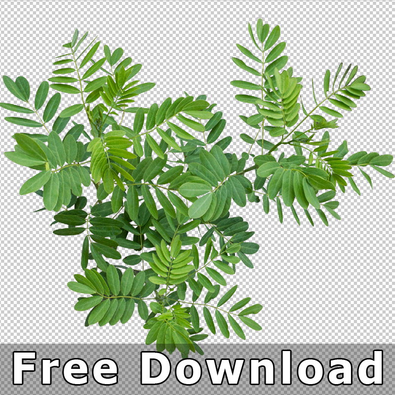 300 Free Download Top View Plant Png Landscape