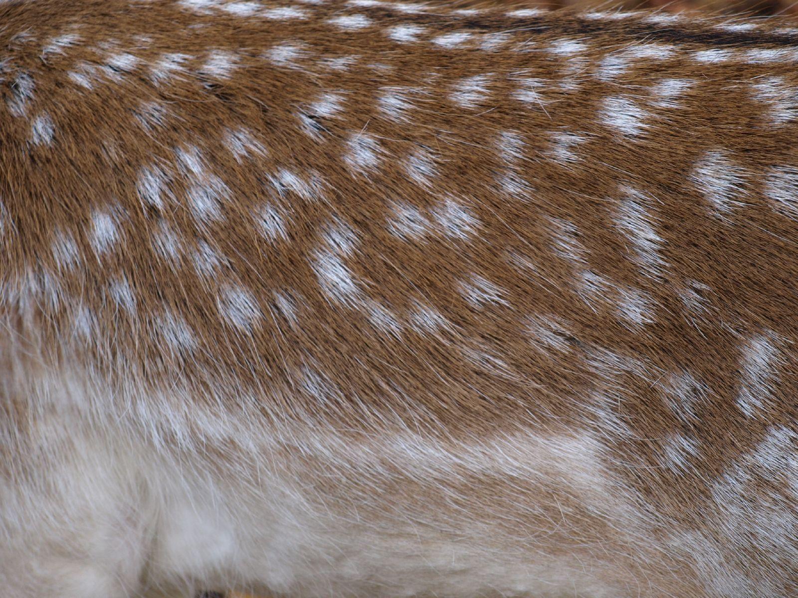 Animal_Photo_Texture_A_PA250507