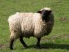 Animal_Photo_Texture_A_P4171274