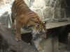 Animal_Photo_Texture_A_P7188613