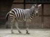 Animal_Photo_Texture_A_P7188629