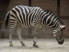Animal_Photo_Texture_A_P7188630