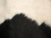 Animal_Photo_Texture_A_P9195014