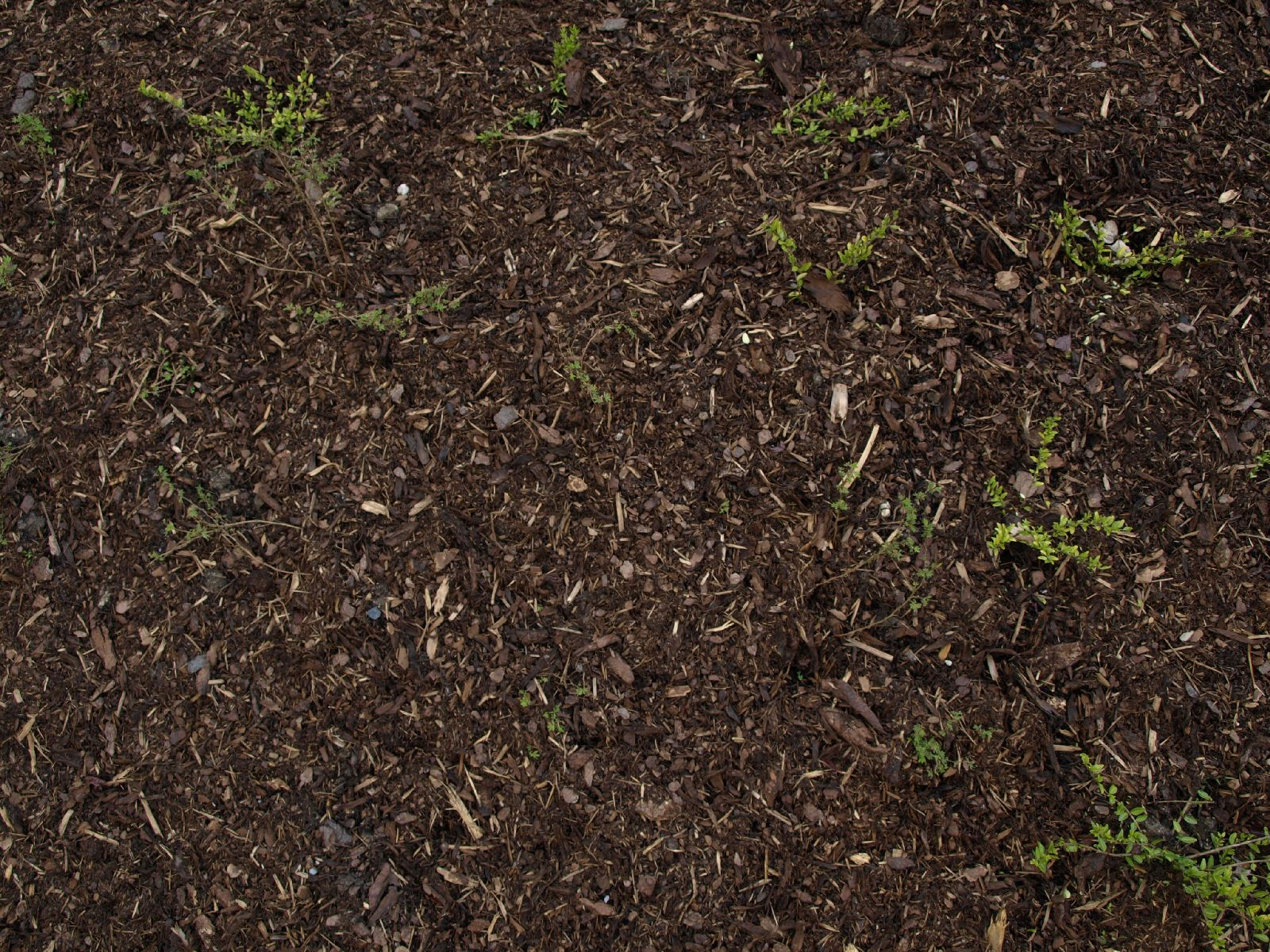 Ground-Nature_Texture_A_P4171308