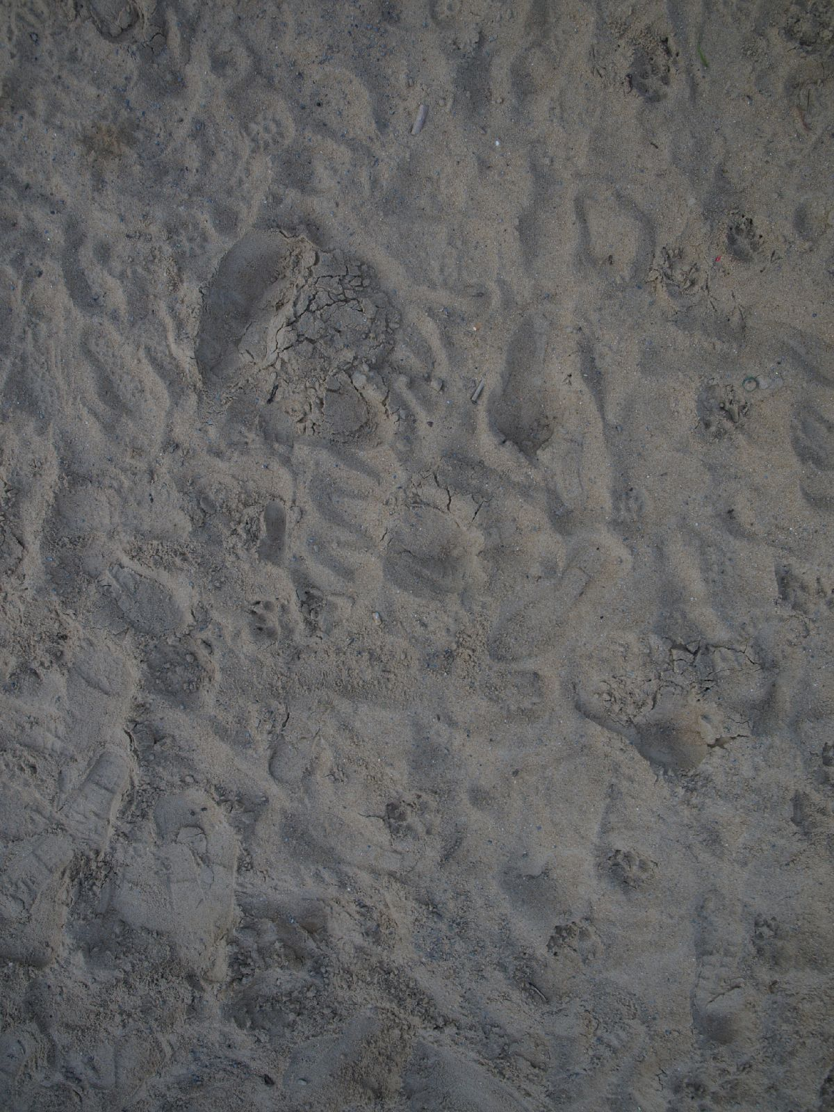 Ground-Nature_Texture_A_P4201602