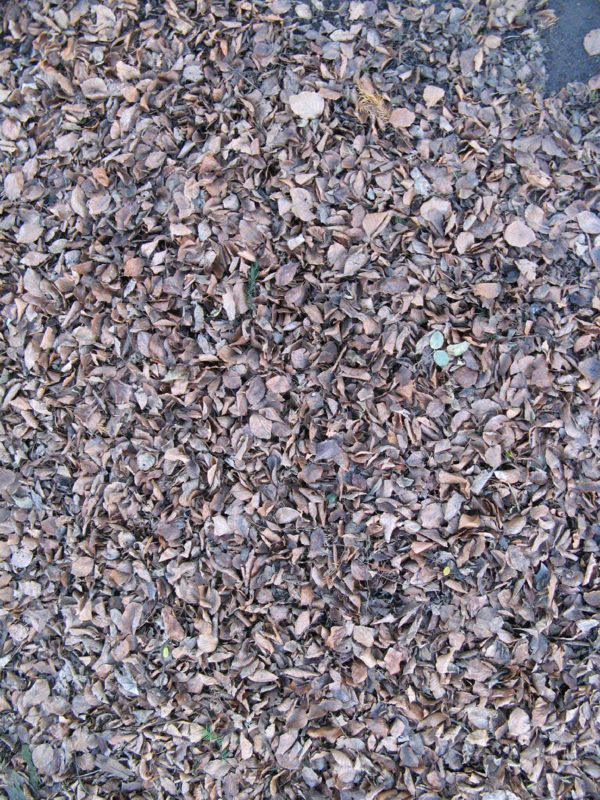Ground-Nature_Texture_B_02818