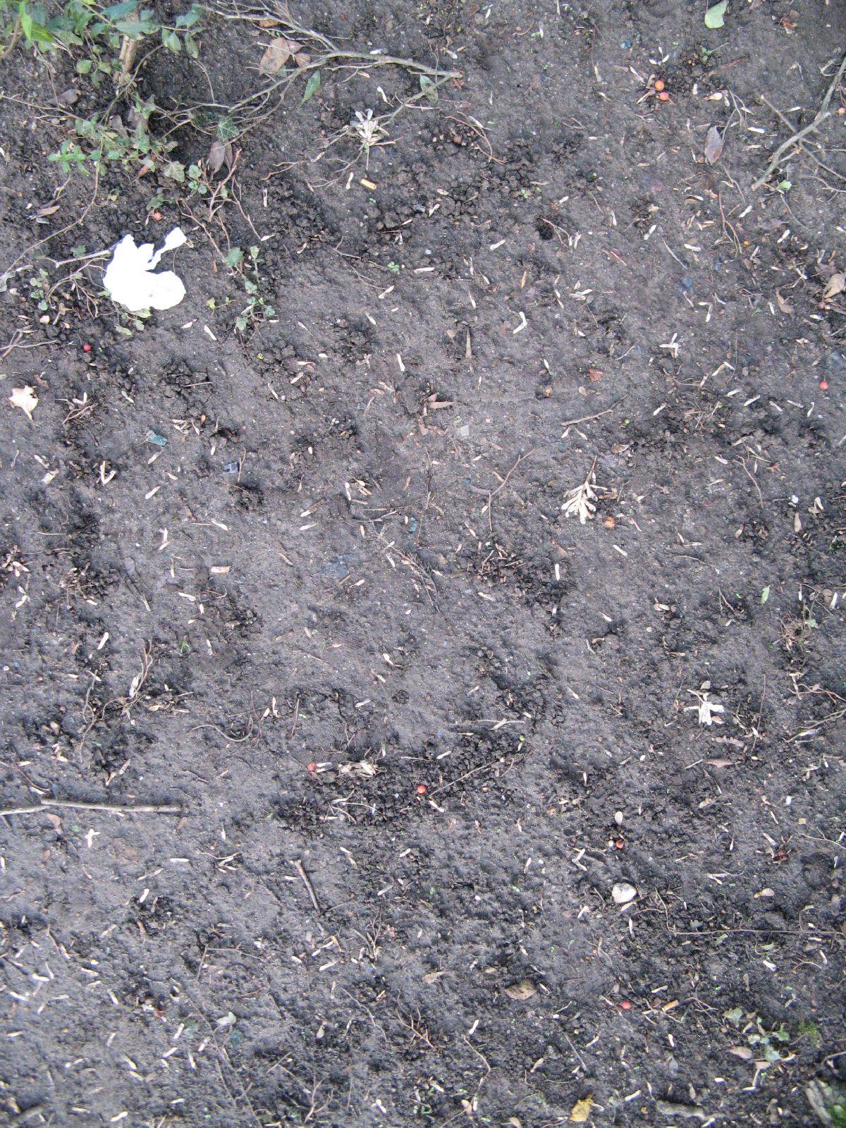 Ground-Nature_Texture_B_02838
