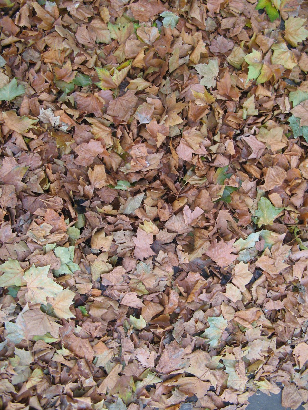 Ground-Nature_Texture_B_08870