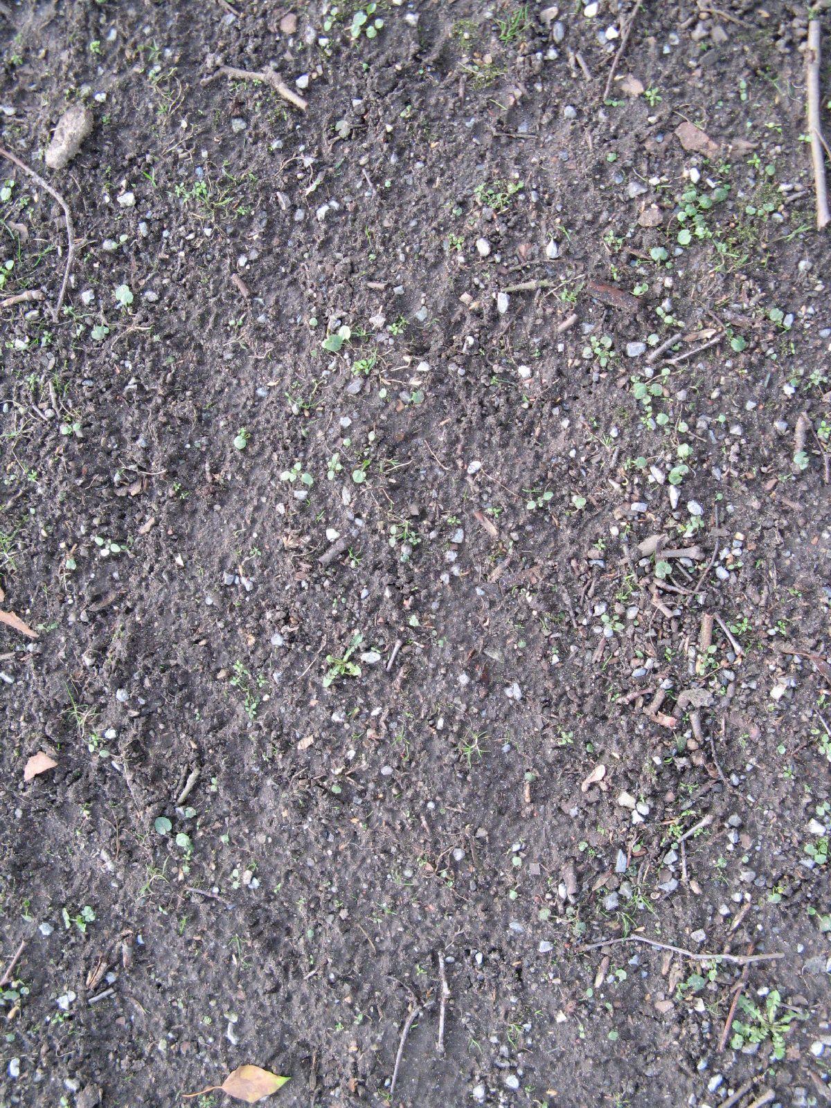 Ground-Nature_Texture_B_3837