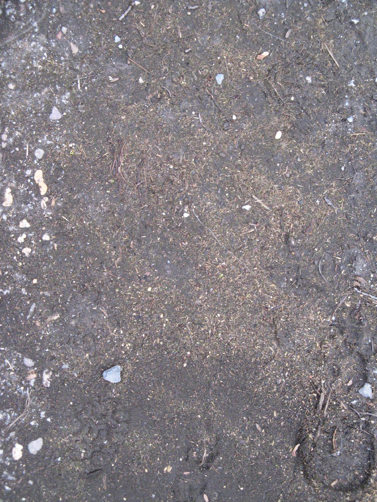 Ground-Nature_Texture_B_5583