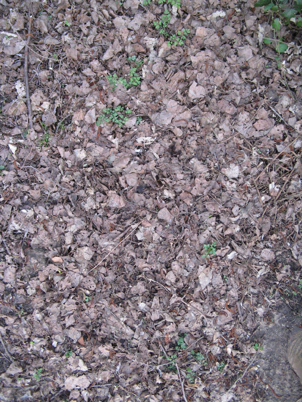 Ground-Nature_Texture_B_5587