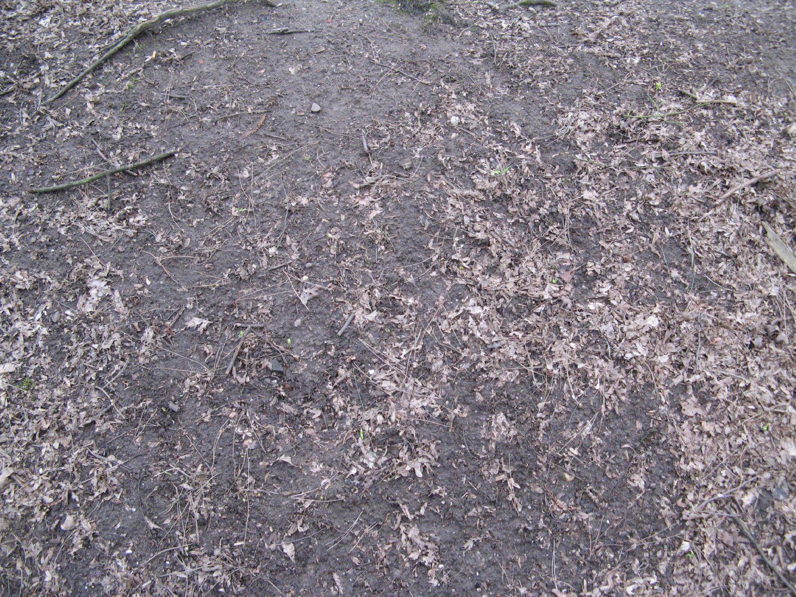 Ground-Nature_Texture_B_5597