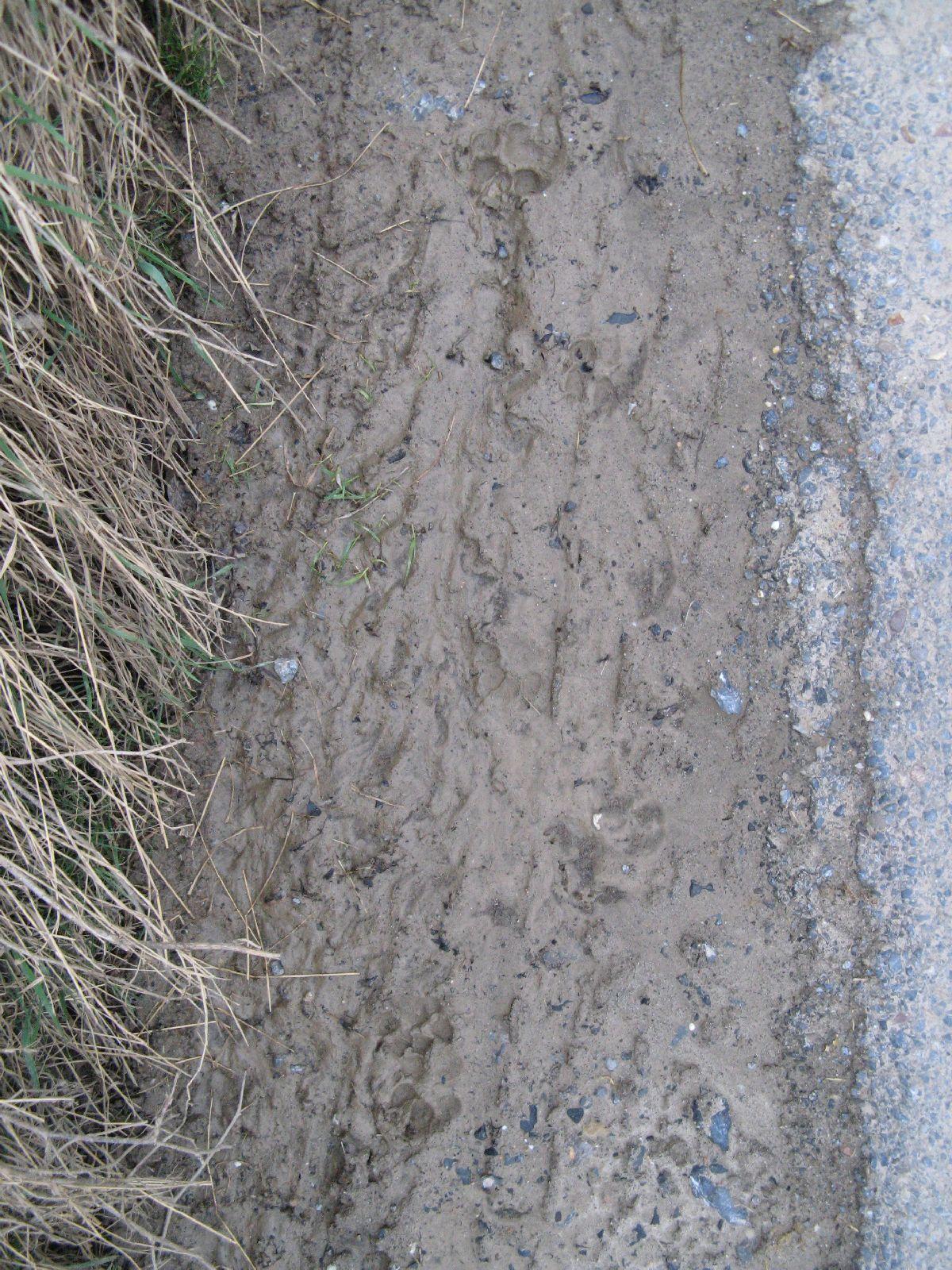 Ground-Nature_Texture_B_5638