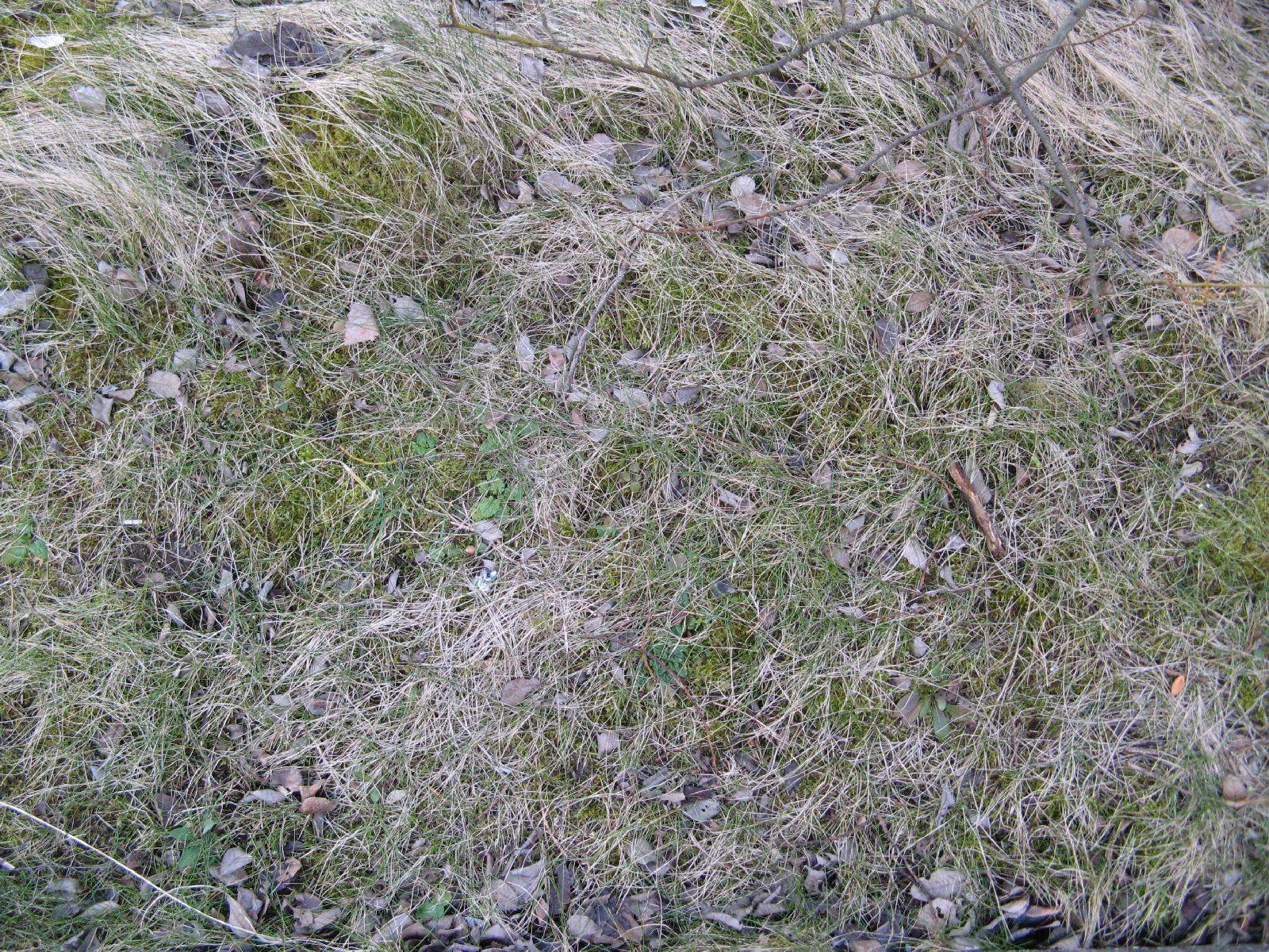 Ground-Nature_Texture_B_6022