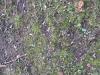 Ground-Nature_Texture_B_3839