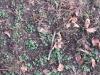 Ground-Nature_Texture_B_3844