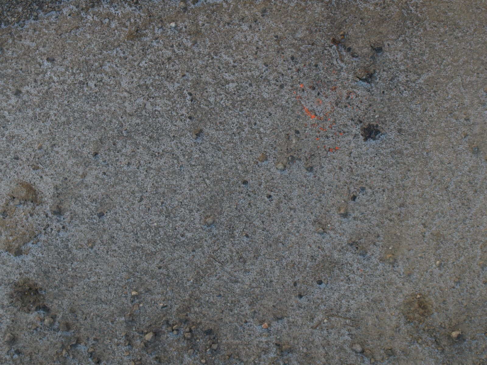 Ground-Nature_Texture_A_P1018632
