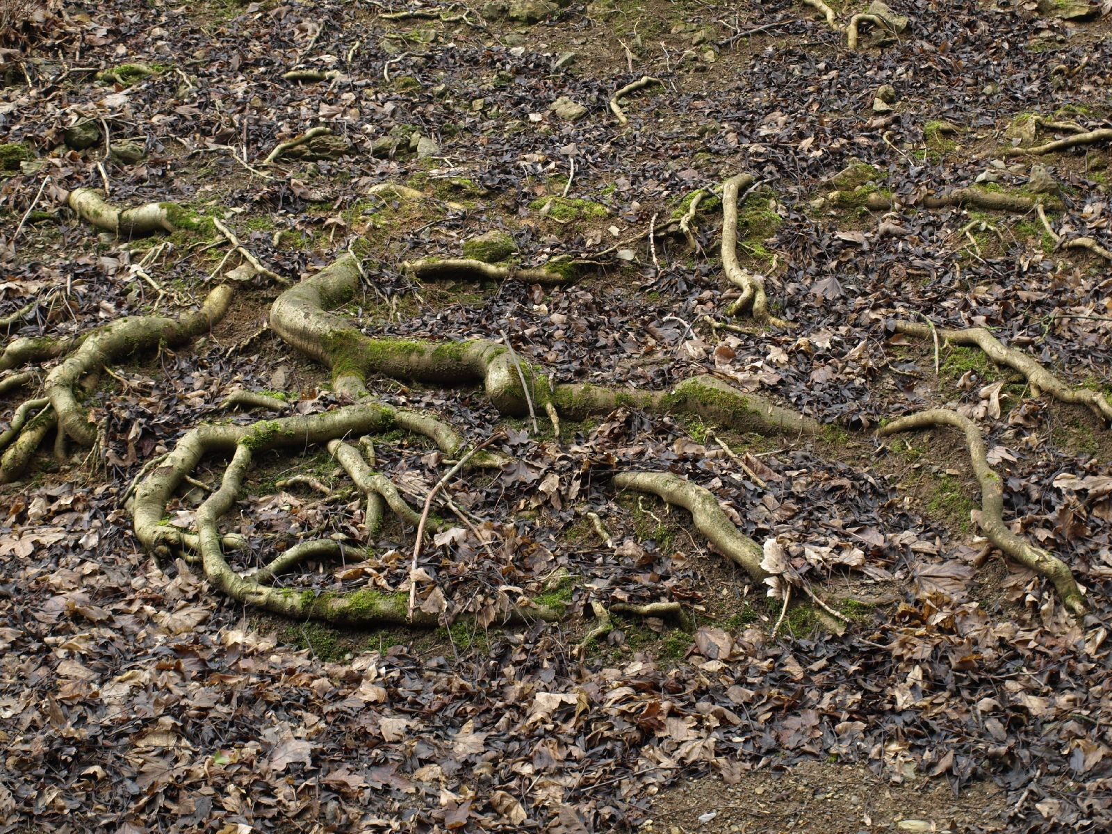 Ground-Nature_Texture_A_P3071159