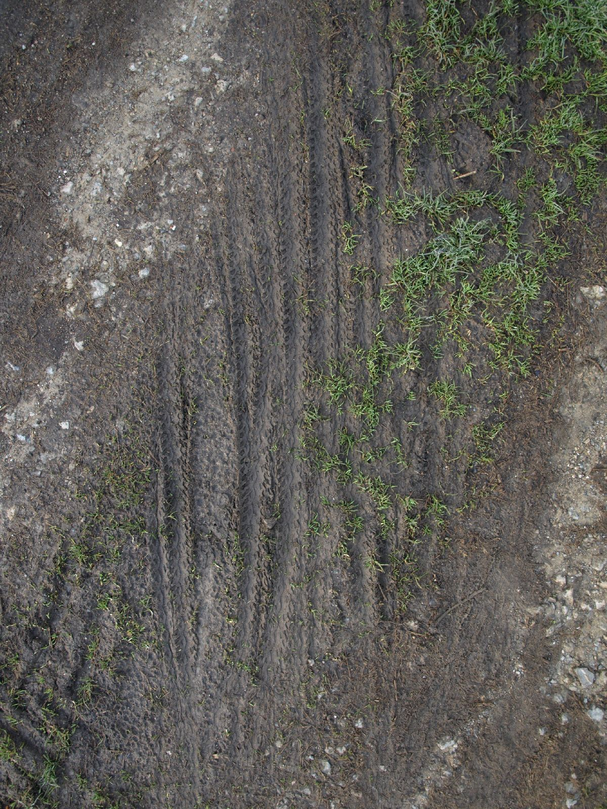 Ground-Nature_Texture_A_P4070132