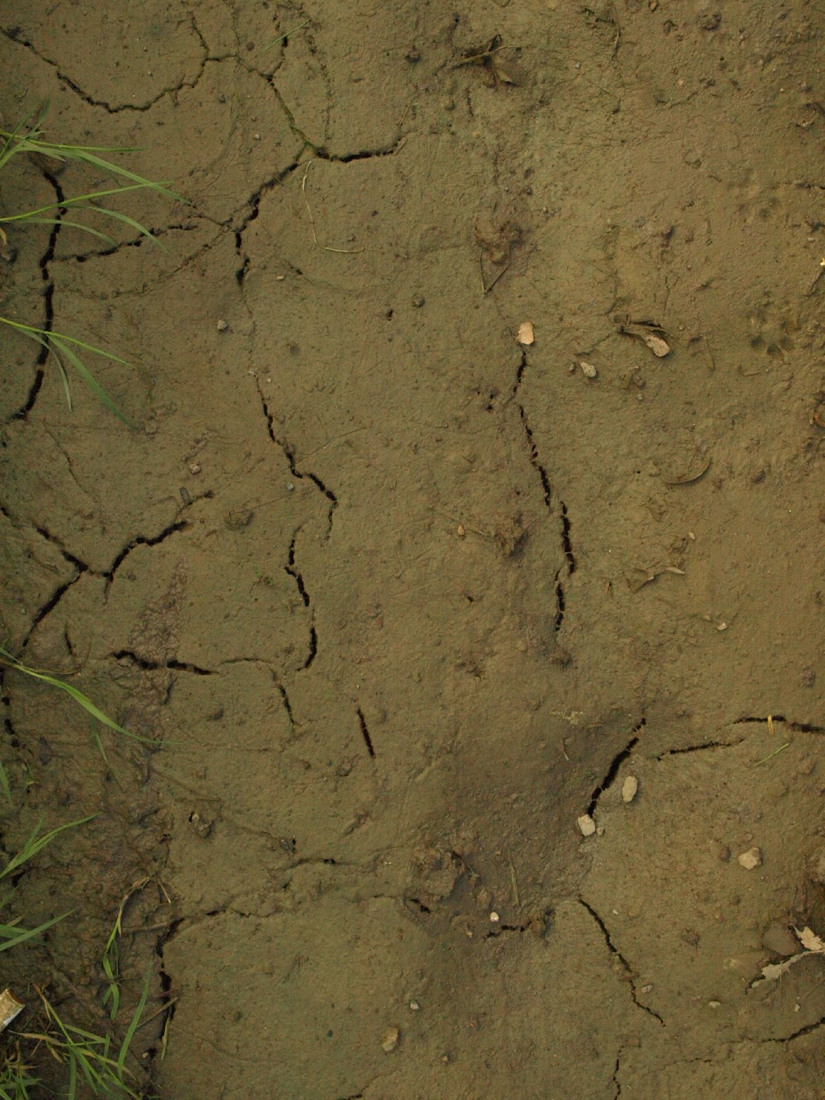Ground-Nature_Texture_A_P4101910