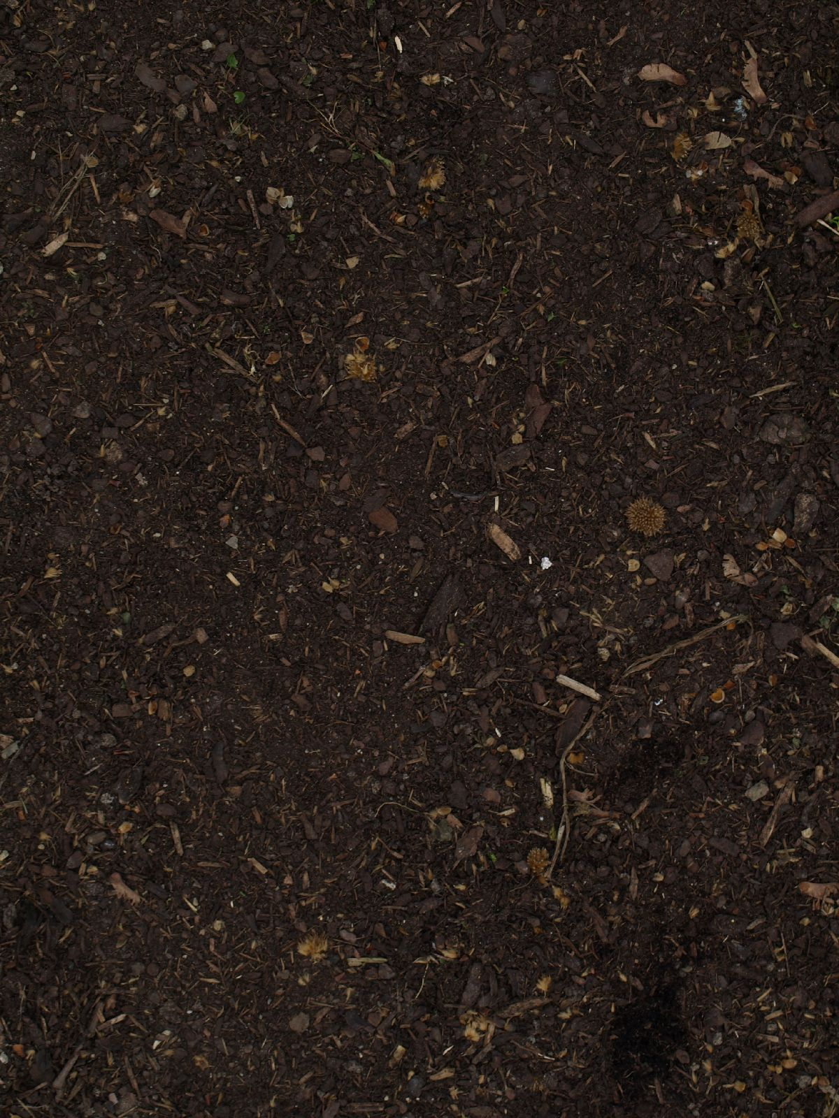 Ground-Nature_Texture_A_P4120842